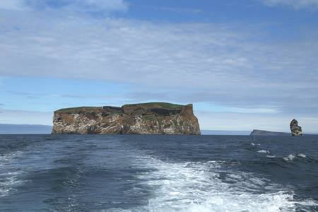 Drangey Island: The paradise in Iceland to spot puffins